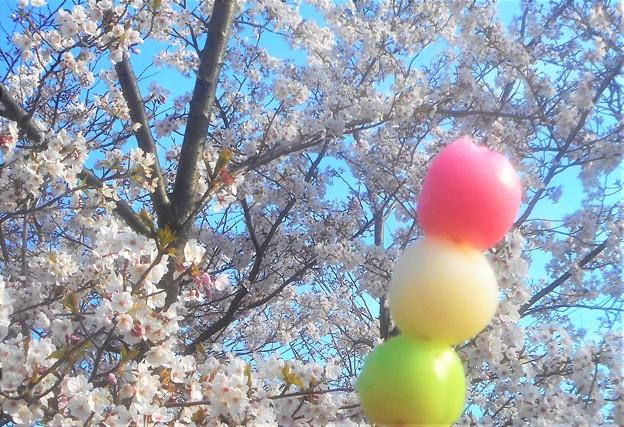 花より団子(三色だんご)@千光寺山公園(花見だんご)