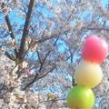 Photos: 花より団子(三色だんご)@千光寺山公園(花見だんご)