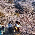 Photos: 満開の桜と女旅@千光寺山