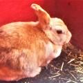 Photos: ウサギさん@動物ふれあい広場@U2周辺