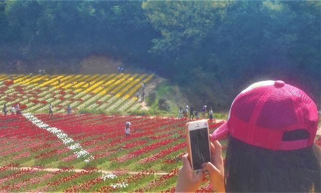 5月の世羅高原の花絵@チューリップ祭2019