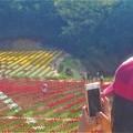 Photos: 5月の世羅高原の花絵@チューリップ祭2019