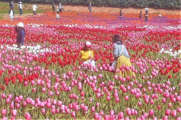 チューリップ祭2019に現れた花絵@世羅高原農場
