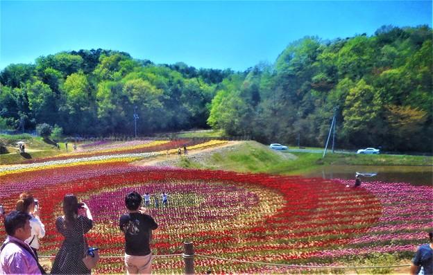 新緑の風とチューリップ祭@世羅高原