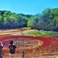 Photos: 新緑の風とチューリップ祭@世羅高原