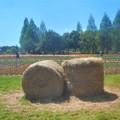 Photos: 牧草ロールのある風景@世羅高原農場