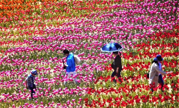 世羅高原の花絵の中にて@チューリップ祭2019