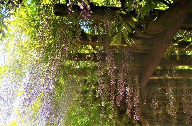 初夏の風と光と陰@ふじ暖簾