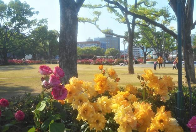 五月のばら公園