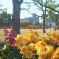 Photos: 五月のばら公園
