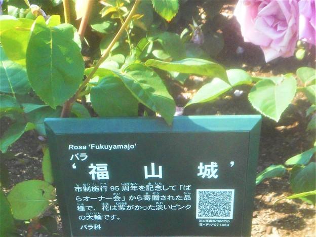 """詳細はQRコードから@五月の薔薇 """"福山城""""@中央公園"""