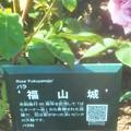 "Photos: 詳細はQRコードから@五月の薔薇 ""福山城""@中央公園"