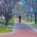 Photos: 杏子(アンズ)の花の咲く頃