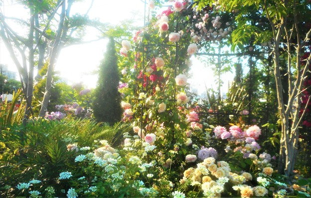新緑のばら公園の薔薇たち