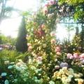 Photos: 新緑のばら公園の薔薇たち