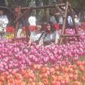 Photos: とても人気の花ブランコで花スマイル@チューリップ祭2019