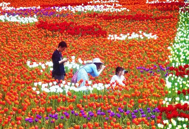 花絵の中で@世羅高原農場