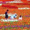 Photos: 花絵の中で@世羅高原農場