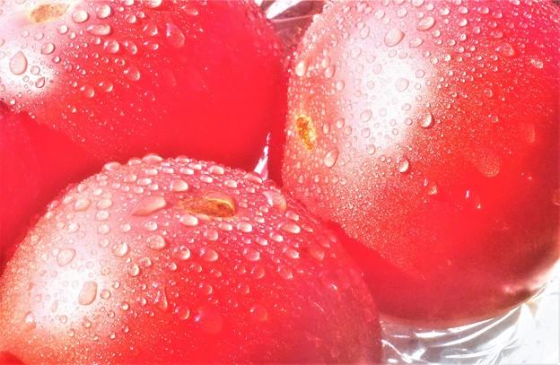 八月の完熟トマト