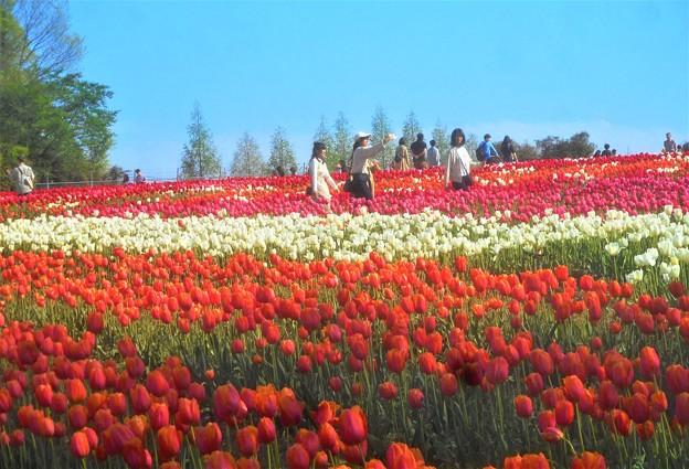五月晴れの世羅高原農場