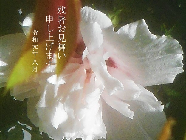 Photos: 残暑お見舞い申し上げます。令和元年八月