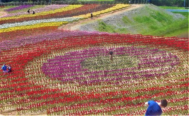 開園40周年の チューリップ祭2019@世羅高原