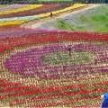 Photos: 開園40周年の チューリップ祭2019@世羅高原