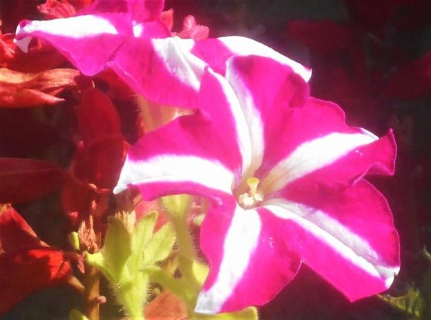 海岸通りの花壇に咲く花@ガーデニング
