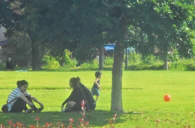 午後の初秋の公園