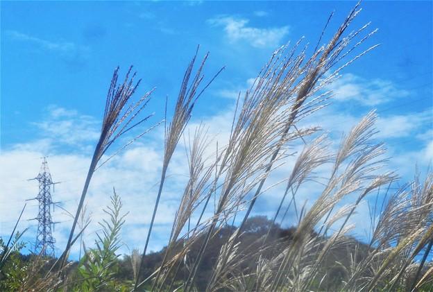 秋の風@すすきと鉄塔