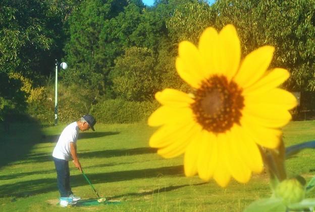 Photos: ゲートボールの練習に余念が無いオジサン と高原のヒマワリ