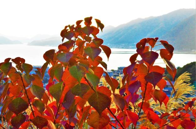 紅葉する糸崎の丘@瀬戸内海