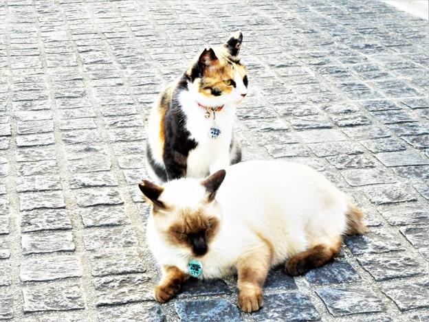 千光寺山のニャンコたち(こてつとチビ)@猫ハウス前