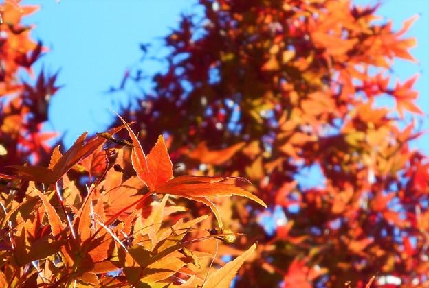 備後路の紅葉