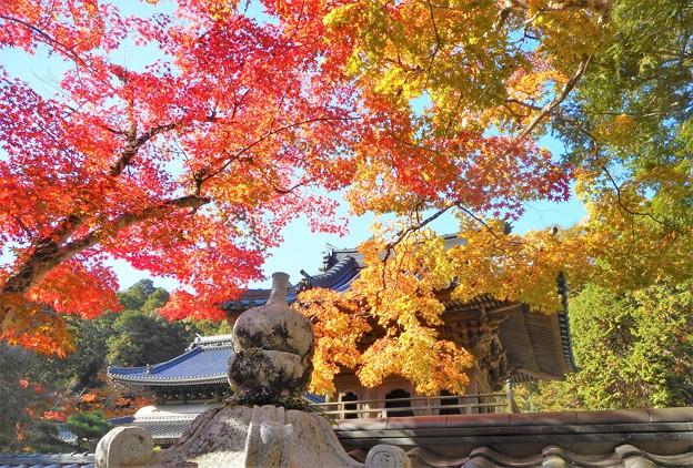 仏殿と鐘楼の秋@大本山 佛通寺