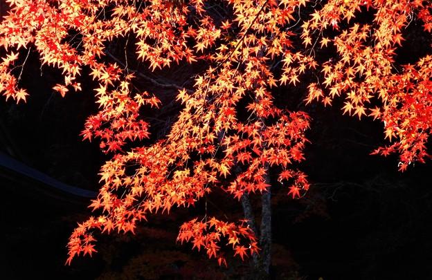 八幡(やはた)川周辺の秋@御調八幡宮の紅葉