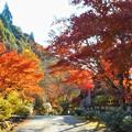 Photos: 古刹・御調八幡宮の秋