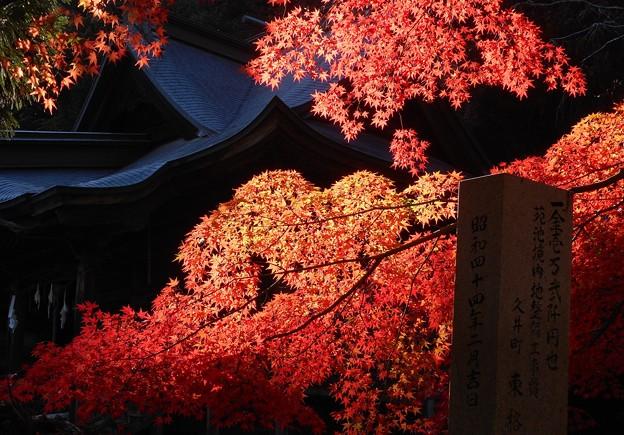 Photos: 備後路の秋@御調八幡宮(本殿東隣り)
