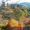 春を待つ桜と八幡川の紅葉@御調八幡宮