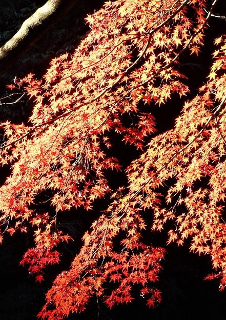 Photos: 御調八幡宮の紅葉@備後路の秋