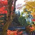 Photos: 巨蟒橋の秋@大本山佛通寺