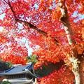 Photos: 仏殿の秋@大本山佛通寺