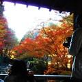 Photos: 佛通寺川の秋@巨蟒橋の紅葉