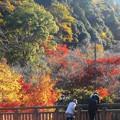 Photos: 八幡川のせせらぎと紅葉@御調八幡宮