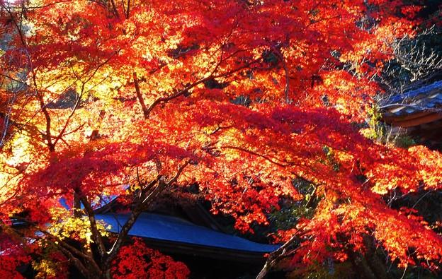 御調八幡宮の秋
