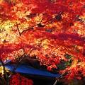 Photos: 御調八幡宮の秋
