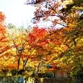 Photos: 永徳院の秋@古刹佛通寺