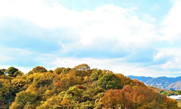 晩秋の瑠璃山の山頂風景