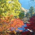 御調八幡宮の紅葉