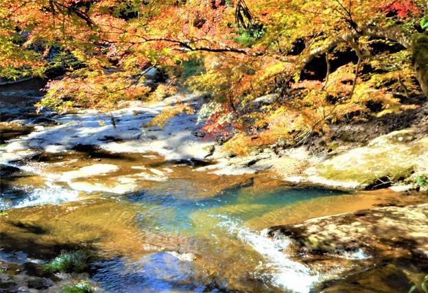晩秋の佛通寺川の紅葉